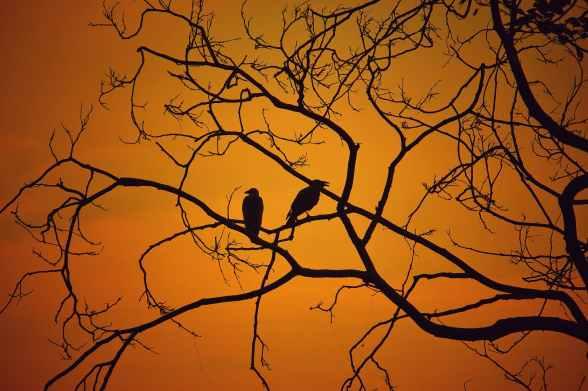 birds branches
